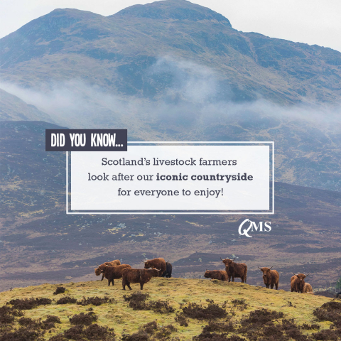 Scottish livestock farmers look after our iconic countryside.